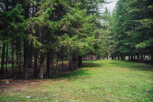 Paysage de forêt atmosphérique avec prairie