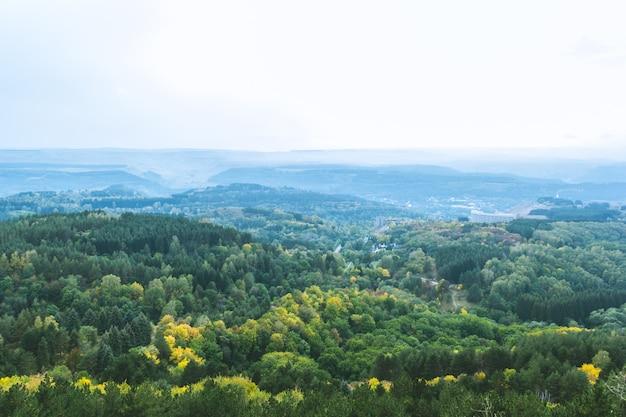 Paysage de forêt d'automne froid