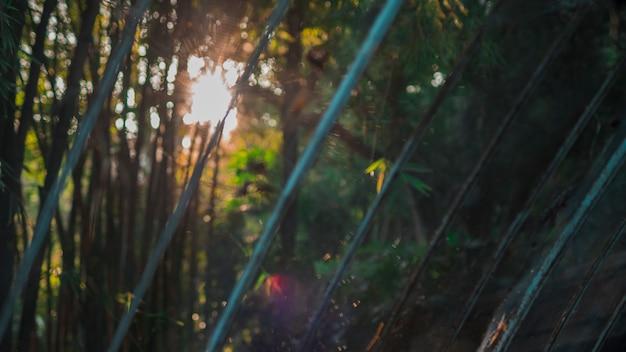 Paysage de forêt de bambou