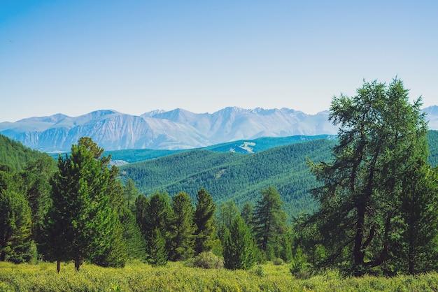 Paysage avec forêt de conifères contre collines avec forêt contre chaîne de montagnes