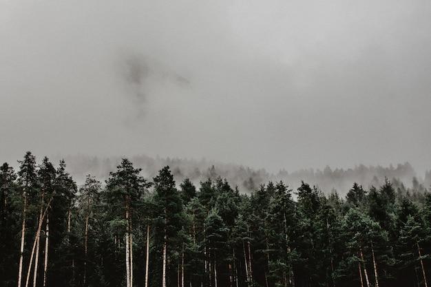 Paysage d'une forêt couverte de brouillard