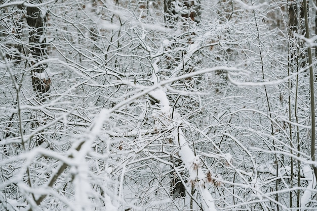 Paysage d'une forêt couverte de neige dans une chute de neige