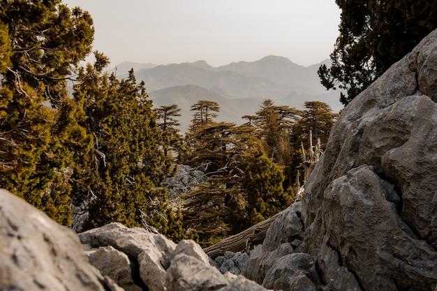 Paysage de forêt dans les hautes terres en turquie