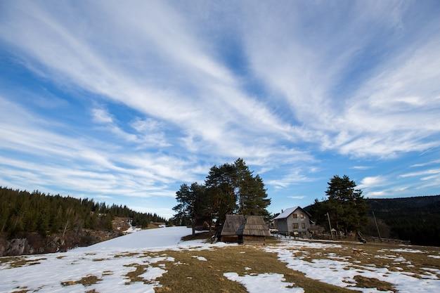 Paysage de forêt d'hiver enneigé