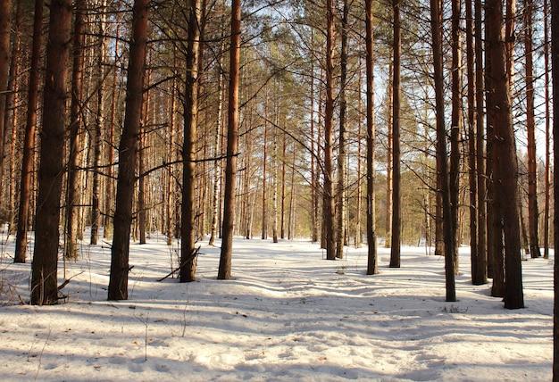 Paysage de forêt en journée ensoleillée d'hiver