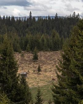Paysage de forêt de pins