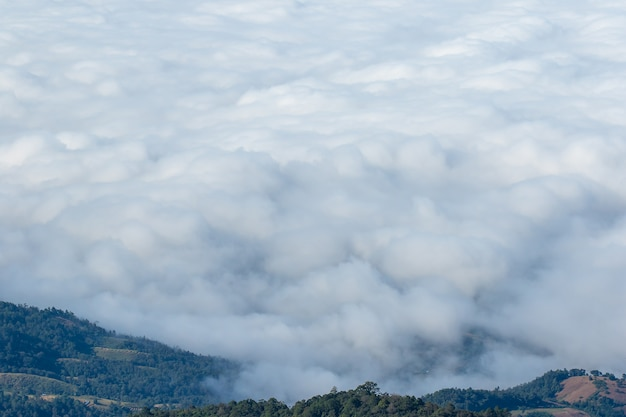 Le paysage de forêt recouverte de brouillard de haute montagne.