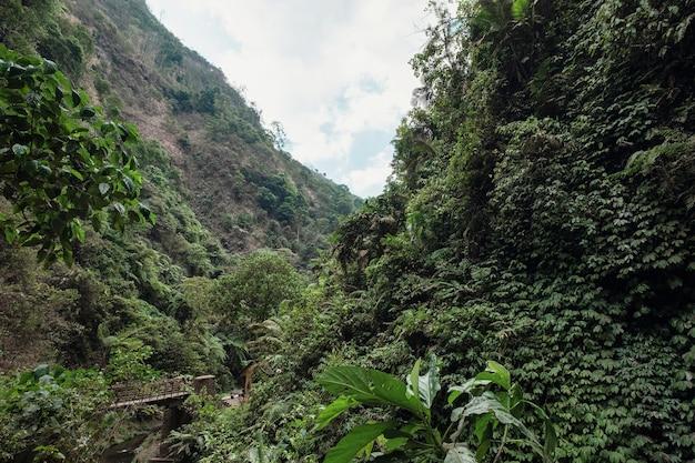 Paysage de forêt tropicale humide dans le parc national en indonésie