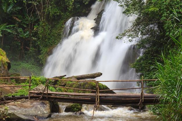 Paysage de forêt tropicale humide avec des plantes de la jungle