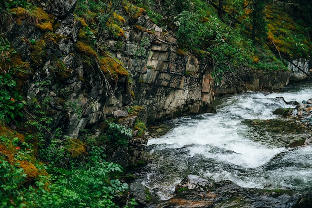 Paysage de forêt verte atmosphérique avec ruisseau de montagne dans la vallée rocheuse.