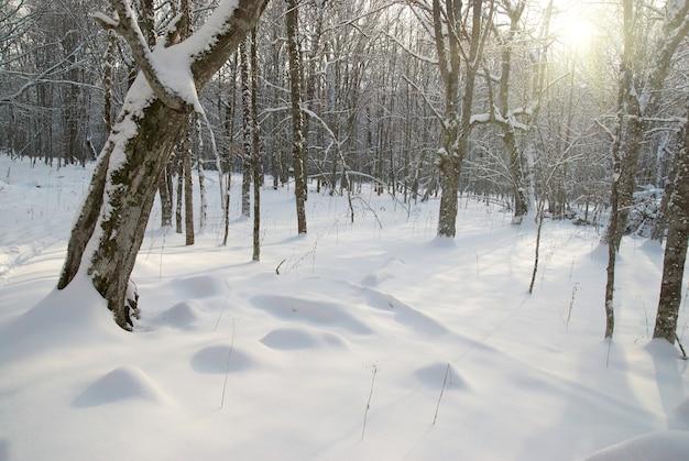 Paysage glacial d'hiver avec une journée brillante