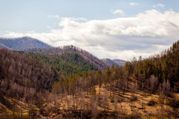 Paysage des hautes montagnes de l'altaï du district de chemal au début du printemps avec forêt de conifères et de bouleaux, le ciel est couvert de nuages