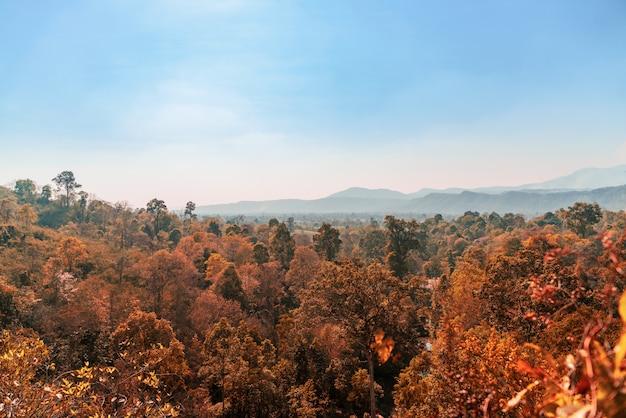 Paysage de hauteurs avec forêt d'été montagne et beau ciel bleu