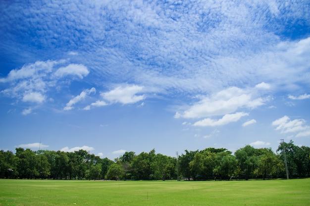 Paysage d'herbe et beau ciel.