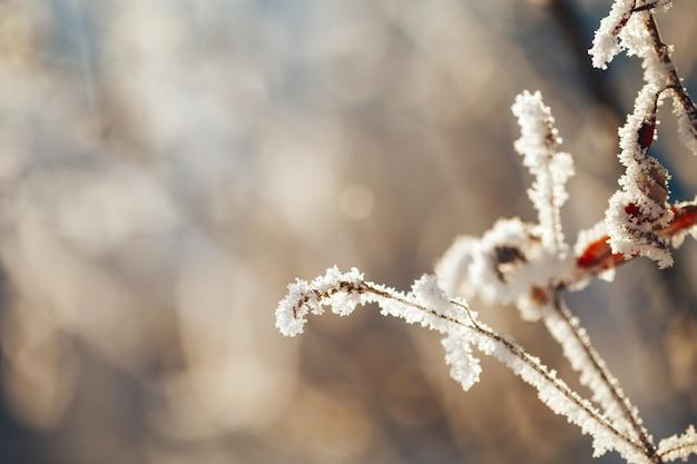 Paysage d'hiver avec des arbres et des buissons givrés
