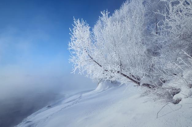 Paysage d'hiver avec des arbres couverts de givre sur la rive d'une rivière brumeuse