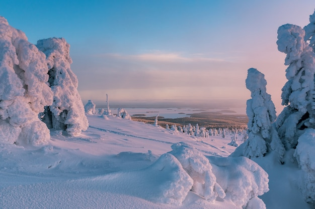 Paysage d'hiver avec des arbres couverts de neige dans la forêt d'hiver en finlande laponie.
