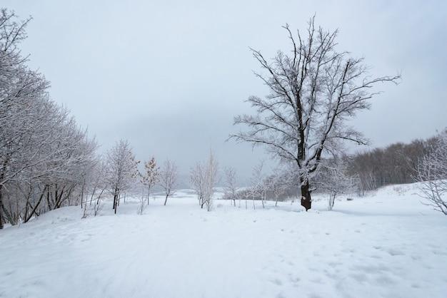 Paysage d'hiver, arbres dans la neige près d'une rivière gelée après une forte chute de neige