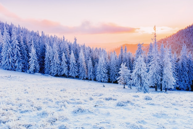 Paysage d'hiver des arbres en gelée