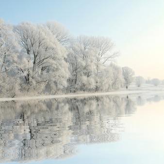 Paysage d'hiver d'arbres givrés contre le ciel bleu