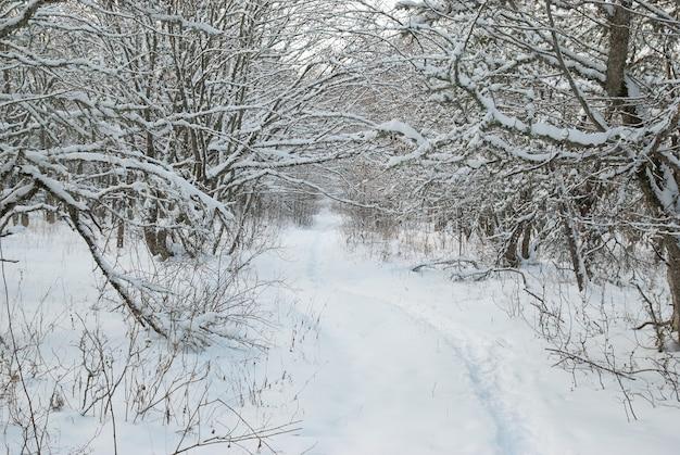 Paysage d'hiver avec des arbres glacés.