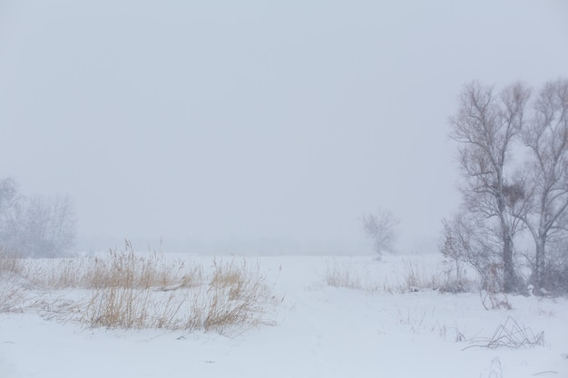 Paysage d'hiver. arbres sans feuillage dans un champ recouvert de neige.
