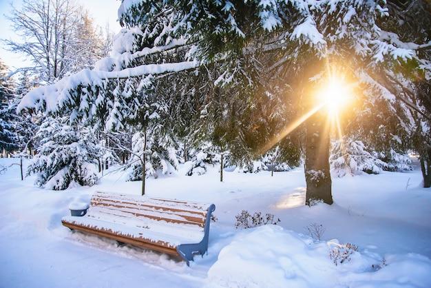 Paysage d'hiver avec un banc et la lumière du soleil