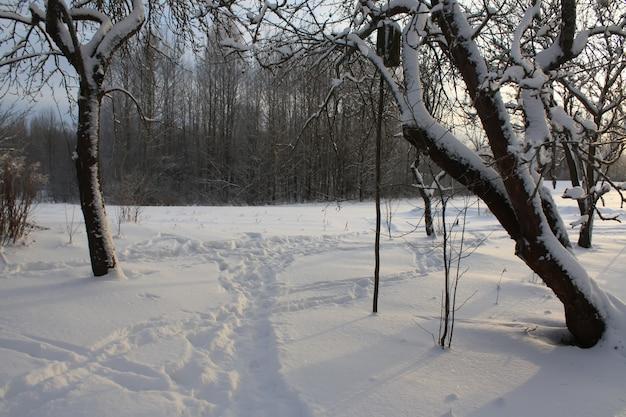 Paysage d'hiver à la campagne en lettonie, en europe de l'est.