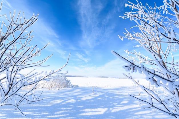Paysage d'hiver. champ de neige blanche, ciel bleu, arbres couverts de givre. vue panoramique.