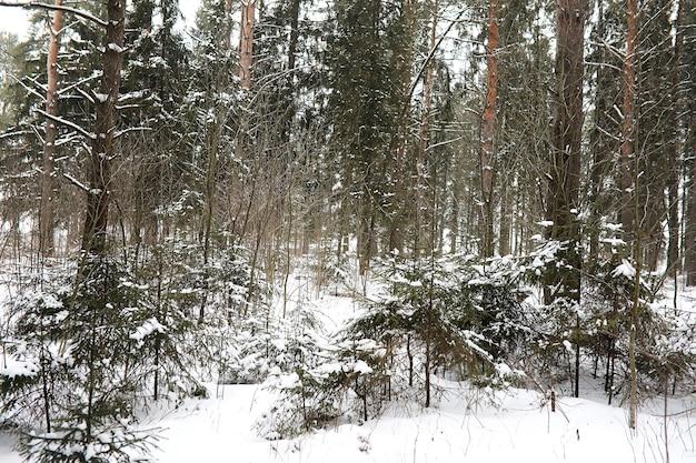 Paysage d'hiver des champs de pays et des routes dans la neige