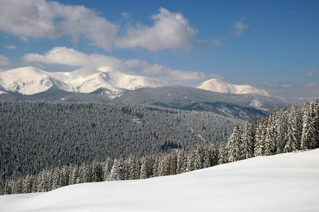 Paysage d'hiver avec des collines de haute montagne couvertes d'une forêt de pins à feuilles persistantes après de fortes chutes de neige par une froide journée d'hiver.