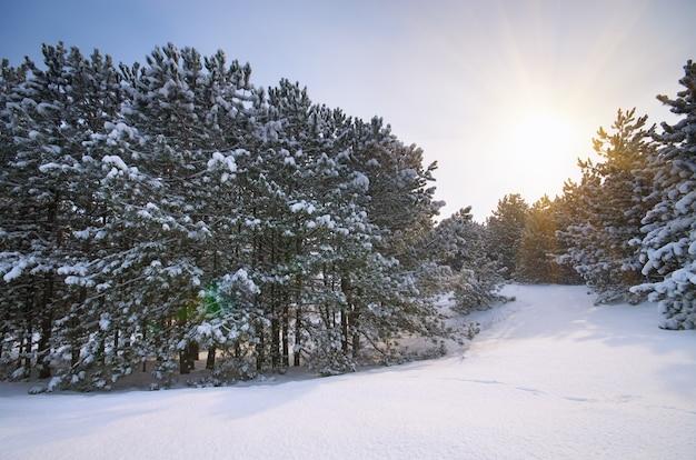 Paysage d'hiver. composition de la nature.