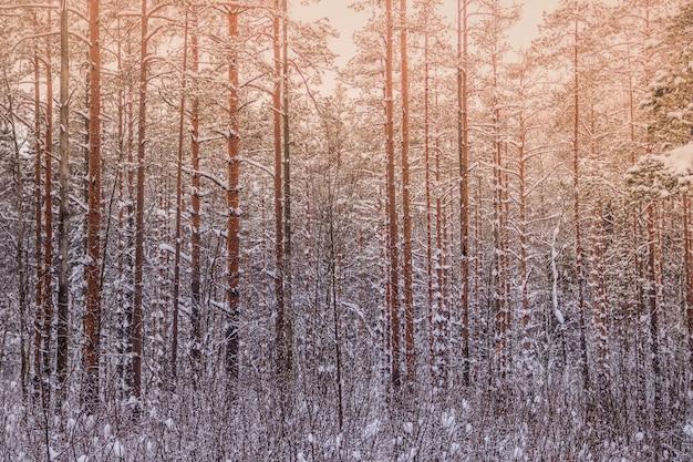 Paysage d'hiver dans la forêt. des arbres dans la neige. image de neige.
