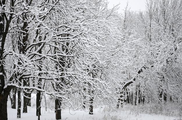 Paysage d'hiver dans un parc enneigé après une forte chute de neige mouillée. une épaisse couche de neige repose sur les branches des arbres