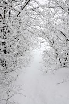 Paysage d'hiver dans un parc enneigé après une forte chute de neige mouillée.