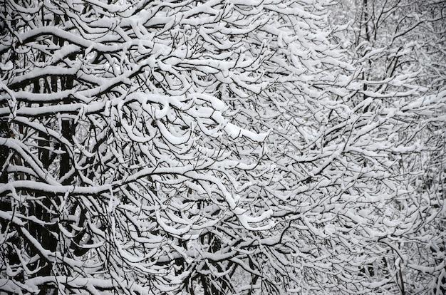 Paysage d'hiver dans un parc enneigé après une forte chute de neige mouillée