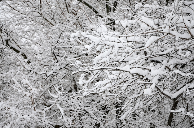 Paysage d'hiver dans un parc enneigé après une forte pluie