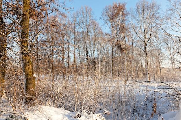 Paysage d'hiver avec différents types d'arbres couverts de neige blanche et de gel en hiver, un jour glacial après une chute de neige