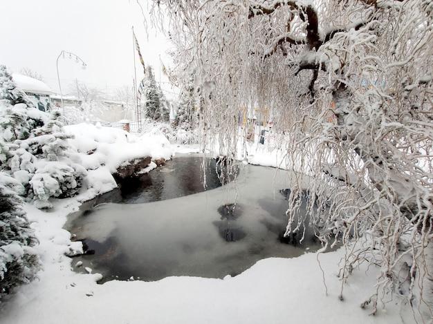 Paysage d'hiver avec étang et arbres.