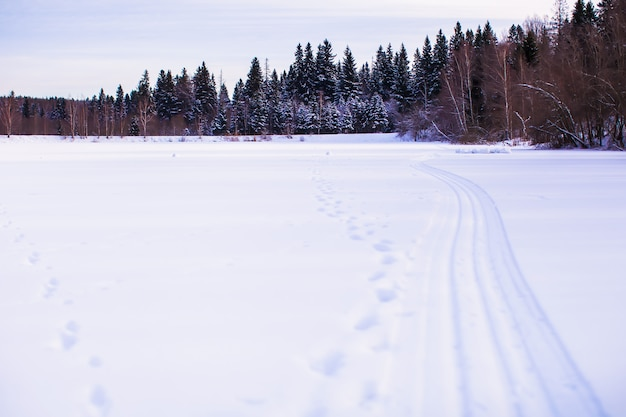 Paysage d'hiver avec forêt à l'arrière