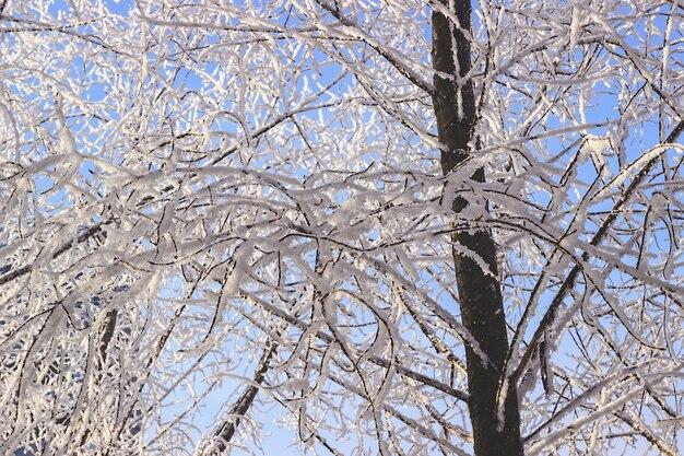 Paysage d'hiver, forêt couverte de neige
