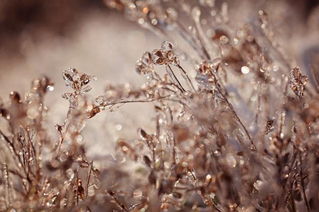 Paysage d'hiver gelé