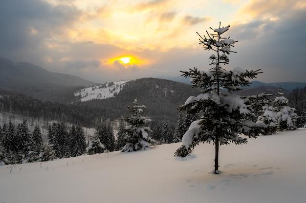 Paysage d'hiver incroyable avec un pin solitaire dans des montagnes brumeuses froides au lever du soleil.