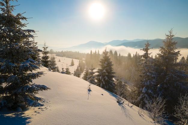 Paysage d'hiver incroyable avec des pins de forêt couverte de neige dans des montagnes brumeuses froides au lever du soleil.