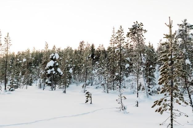 Paysage d'hiver à kiruna en laponie en suède