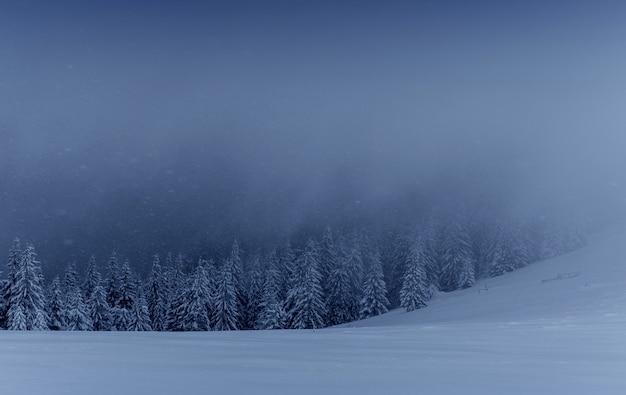 Paysage d'hiver majestueux, forêt de pins avec des arbres recouverts de neige. une scène dramatique avec des nuages noirs bas, un calme avant la tempête
