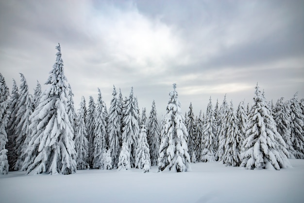 Paysage d'hiver maussade de forêt d'épinettes recroquevillée de neige profonde dans des montagnes glacées et blanches.