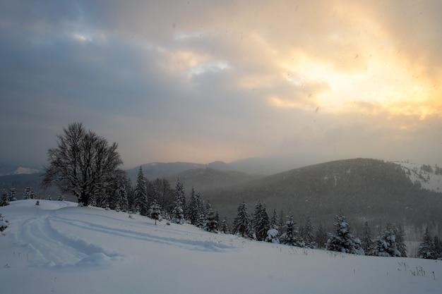 Paysage d'hiver de mauvaise humeur avec un arbre nu sombre sur un champ de neige fraîchement tombée dans les montagnes hivernales par une froide matinée sombre.