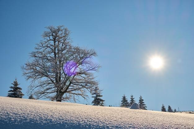 Paysage d'hiver de mauvaise humeur avec un arbre nu sombre sur un champ de neige fraîchement tombée dans les montagnes hivernales par une journée froide et sombre.