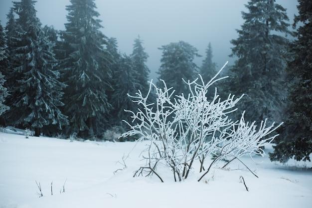 Paysage d'hiver de montagne. belle nature et arbres panoramiques, en montagne.